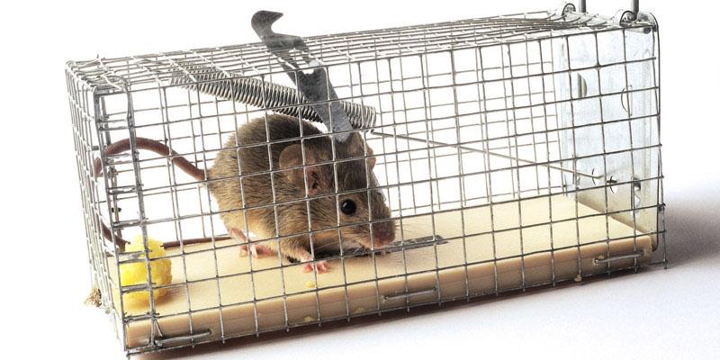 mouse trap2